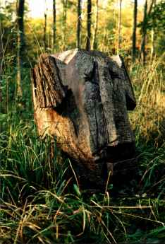Træmænd&; gemt i skoven
